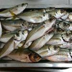 淡輪漁港での釣果