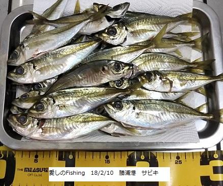 180210勝浦港サビキ