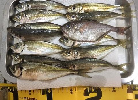 南紀での釣果